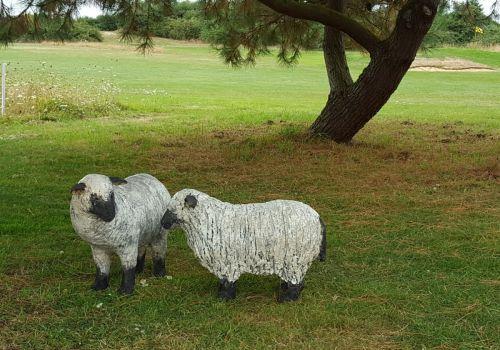 Moutons Lancieux