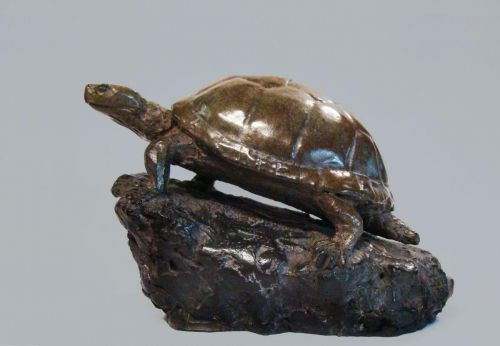 Cistude bronze