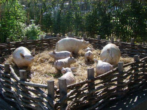 Cochons Orsan