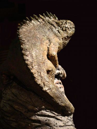 Iguane Brenne - copie