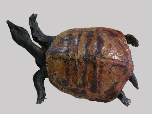 Tortue plate